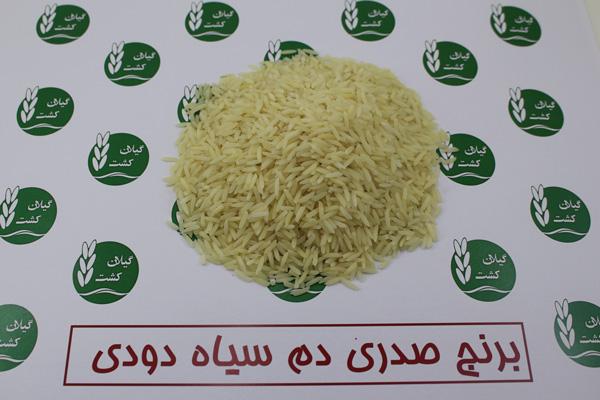 برنج صدری دم سیاه دودی