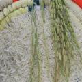 برنج گیلان بهتره یا برنج مازندران