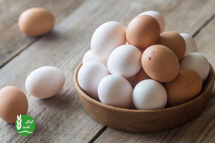 تهیه غذای کودک با تخم مرغ