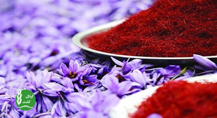 زعفران بهترین کالای صادرتی ایران