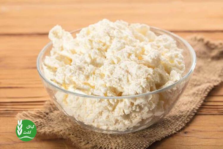تاثیر پنیر کوتاژ بر بدنسازی