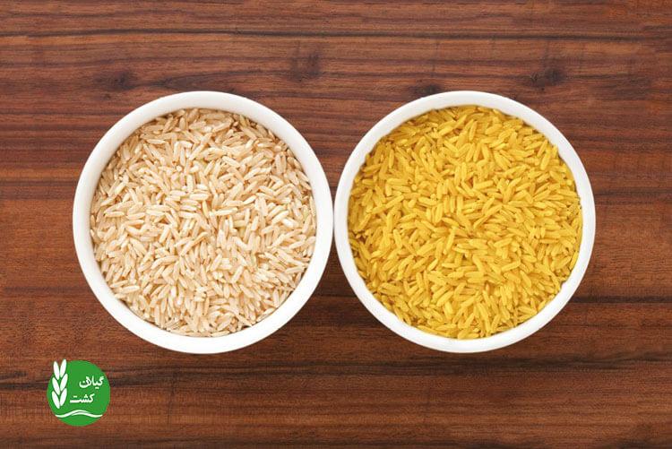 معرفی برنج طلایی